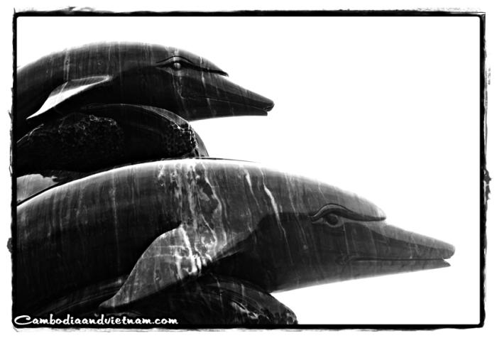 Dolphins - Danang