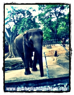 Saigon Zoo