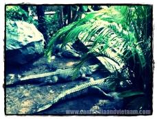 Sun Baking - Saigon Zoo