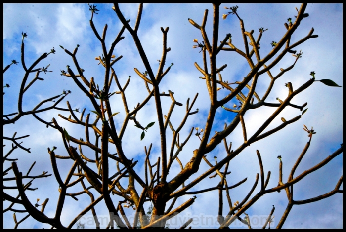Branching out