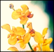 Flowers - Saigon